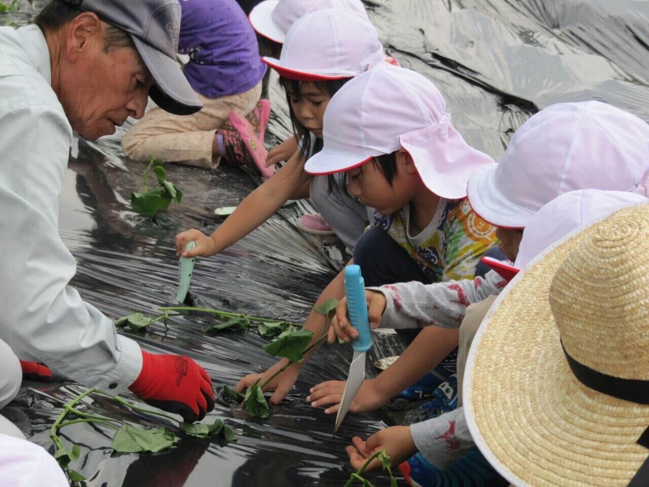 芋の苗植えバスの旅_f0324461_11102280.jpg