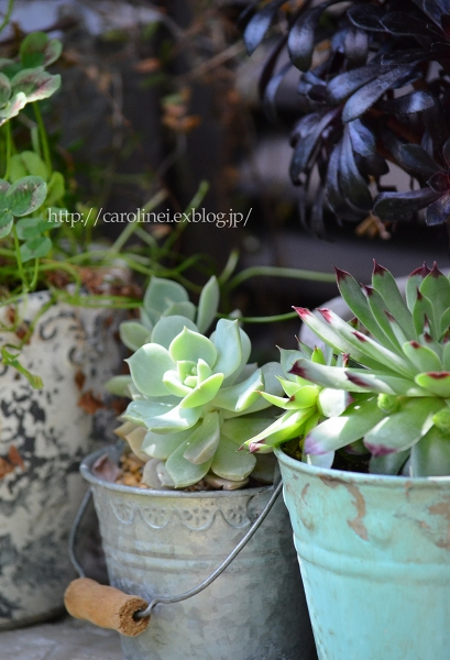 初夏の庭   Gardening in Early Summer_d0025294_14463229.jpg