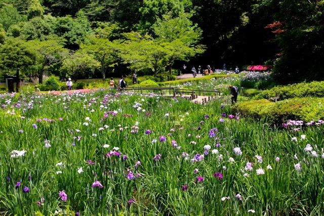 【薬師池公園】part 2_f0348831_17520025.jpg