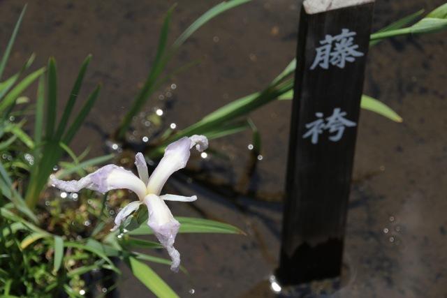 【薬師池公園】part 2_f0348831_17541965.jpg