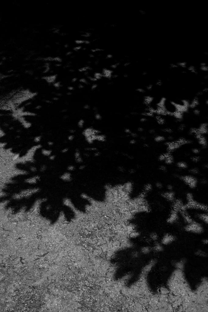 新宿御苑 標準レンズ+モノクローム ワークショップ _f0050534_00003108.jpg