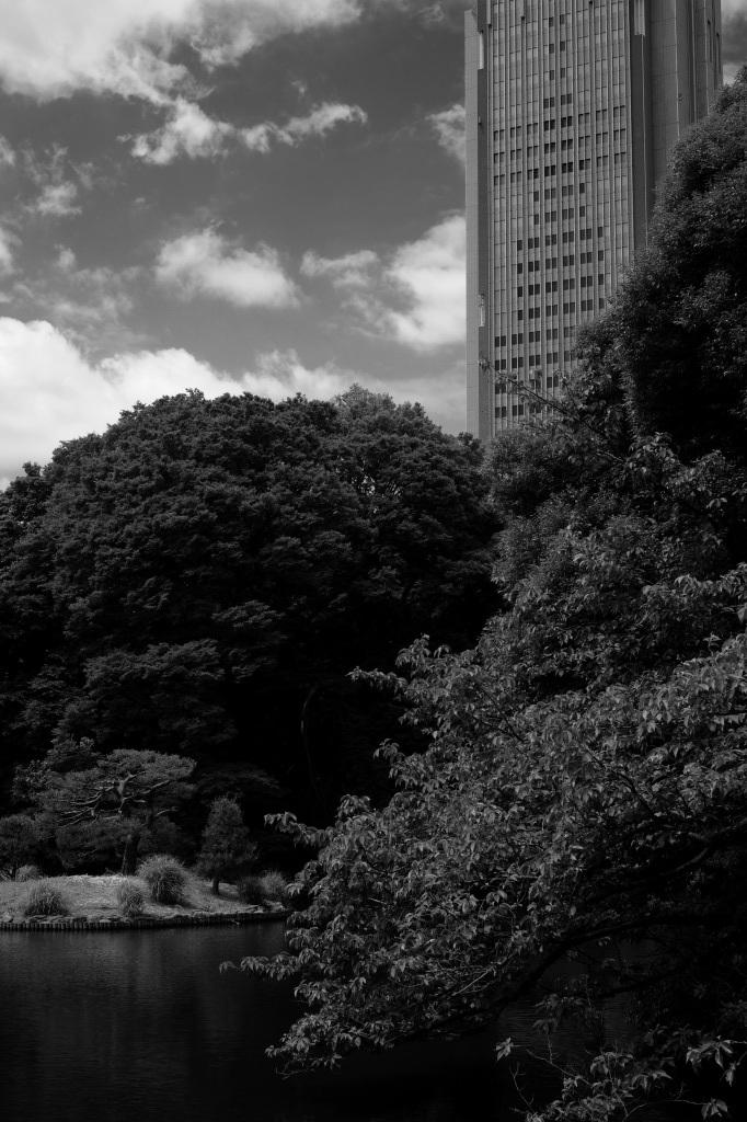 新宿御苑 標準レンズ+モノクローム ワークショップ _f0050534_00003127.jpg