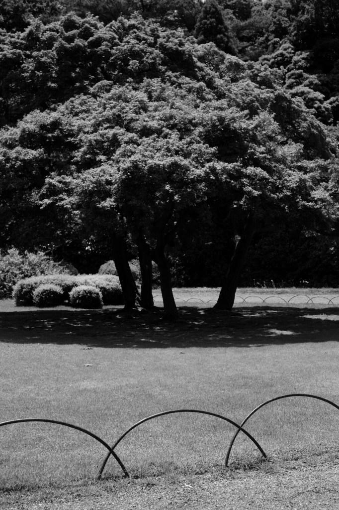 新宿御苑 標準レンズ+モノクローム ワークショップ _f0050534_00003174.jpg