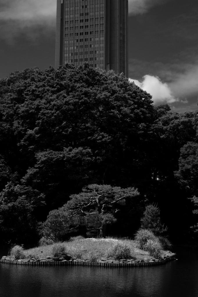新宿御苑 標準レンズ+モノクローム ワークショップ _f0050534_00013266.jpg