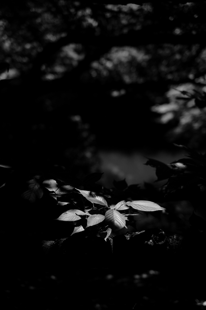 新宿御苑 標準レンズ+モノクローム ワークショップ _f0050534_00030346.jpg