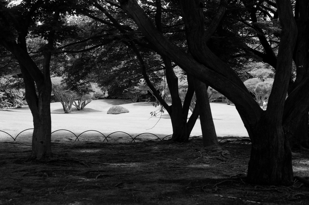 新宿御苑 標準レンズ+モノクローム ワークショップ _f0050534_00030384.jpg