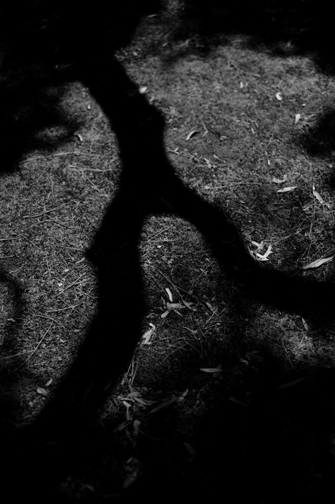 新宿御苑 標準レンズ+モノクローム ワークショップ _f0050534_00030388.jpg