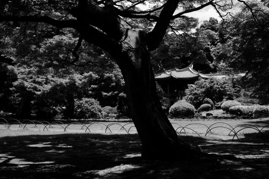 新宿御苑 標準レンズ+モノクローム ワークショップ _f0050534_00044926.jpg