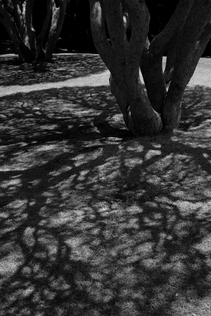 新宿御苑 標準レンズ+モノクローム ワークショップ _f0050534_00054829.jpg