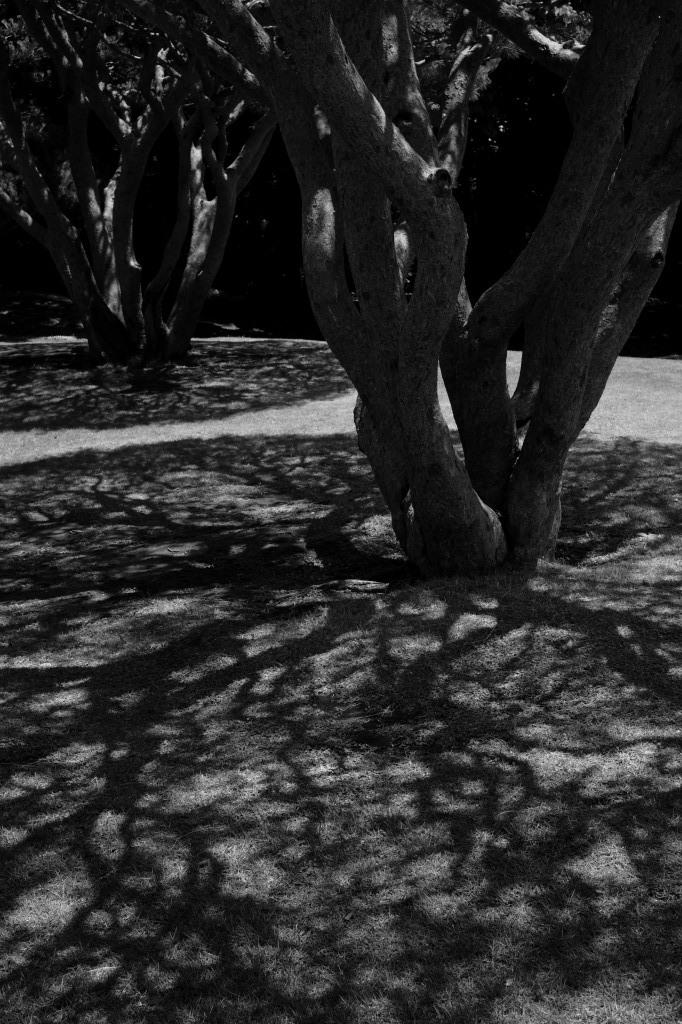 新宿御苑 標準レンズ+モノクローム ワークショップ _f0050534_00054849.jpg