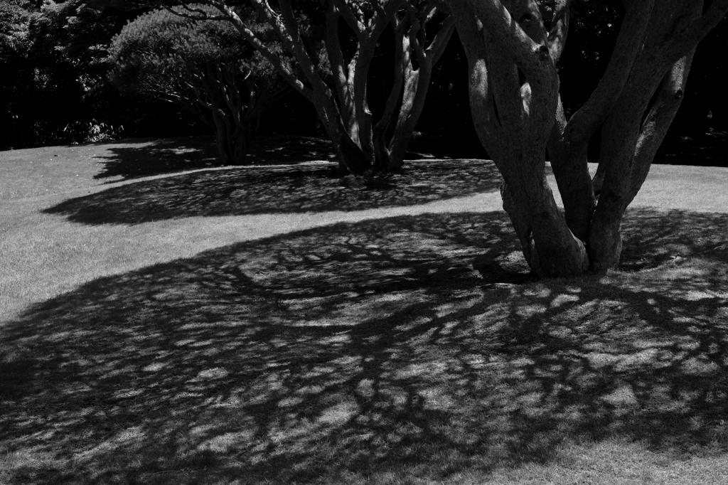 新宿御苑 標準レンズ+モノクローム ワークショップ _f0050534_00054854.jpg