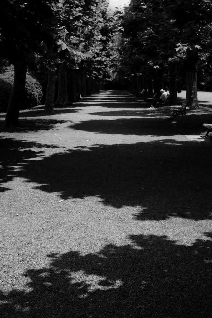 新宿御苑 標準レンズ+モノクローム ワークショップ _f0050534_00090632.jpg