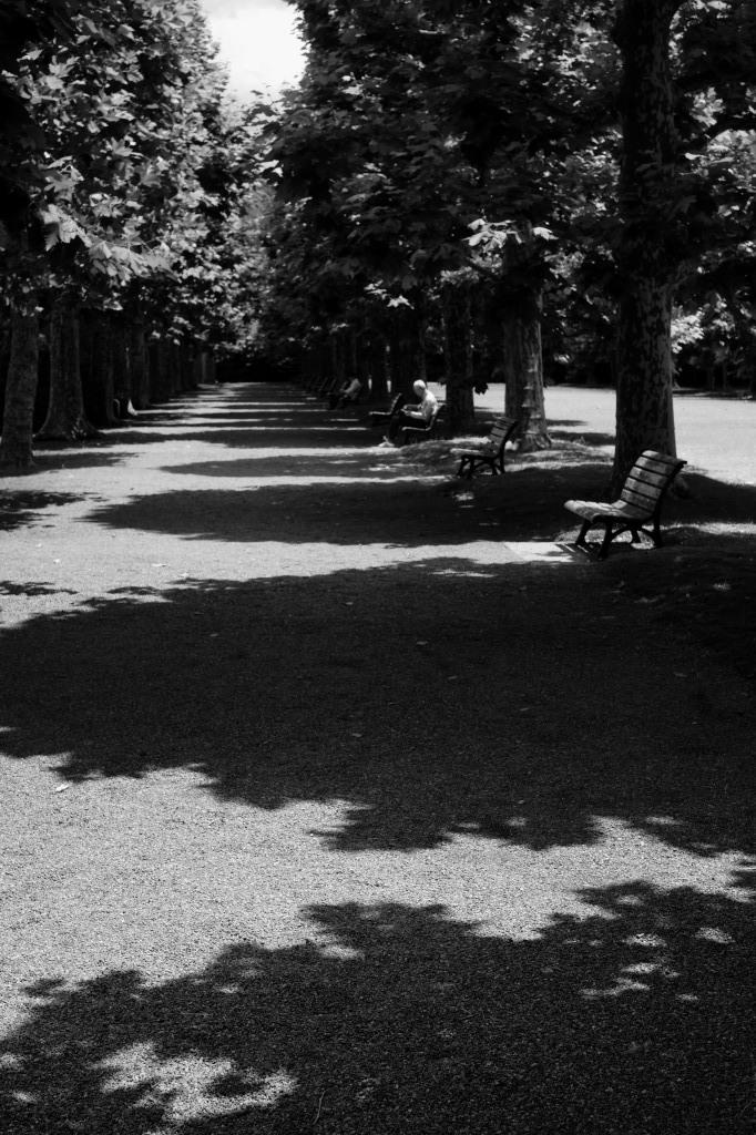 新宿御苑 標準レンズ+モノクローム ワークショップ _f0050534_00090698.jpg