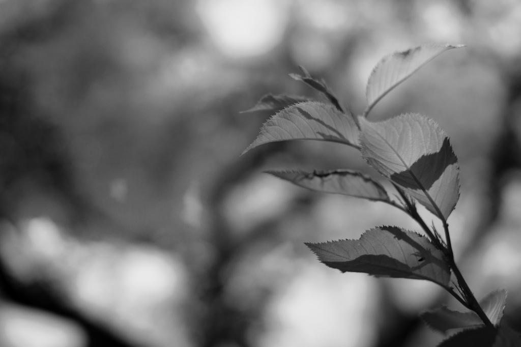 新宿御苑 標準レンズ+モノクローム ワークショップ _f0050534_00111414.jpg