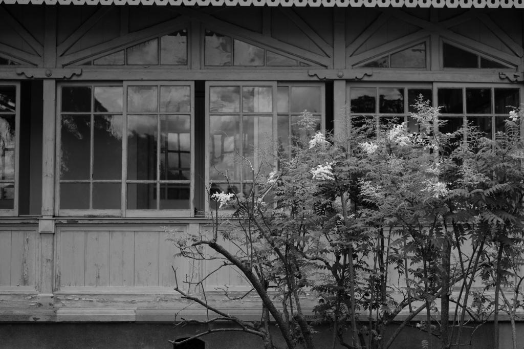 新宿御苑 標準レンズ+モノクローム ワークショップ _f0050534_00111588.jpg