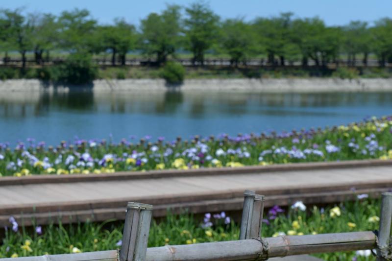 早すぎた 亀鶴公園_d0246136_23385354.jpg
