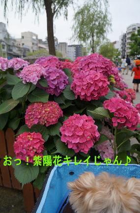 d0013645_11243350.jpg