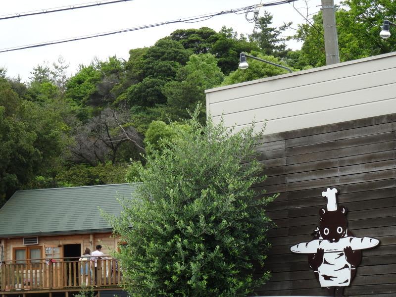 雨中にナルトキントキの植付完了     by     (TATE-misaki)_c0108460_22351401.jpg