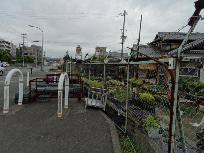 雨中にナルトキントキの植付完了     by     (TATE-misaki)_c0108460_22363168.jpg