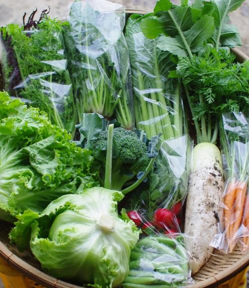 今週の野菜セット(6/9~6/13着)_c0110869_13243312.jpg
