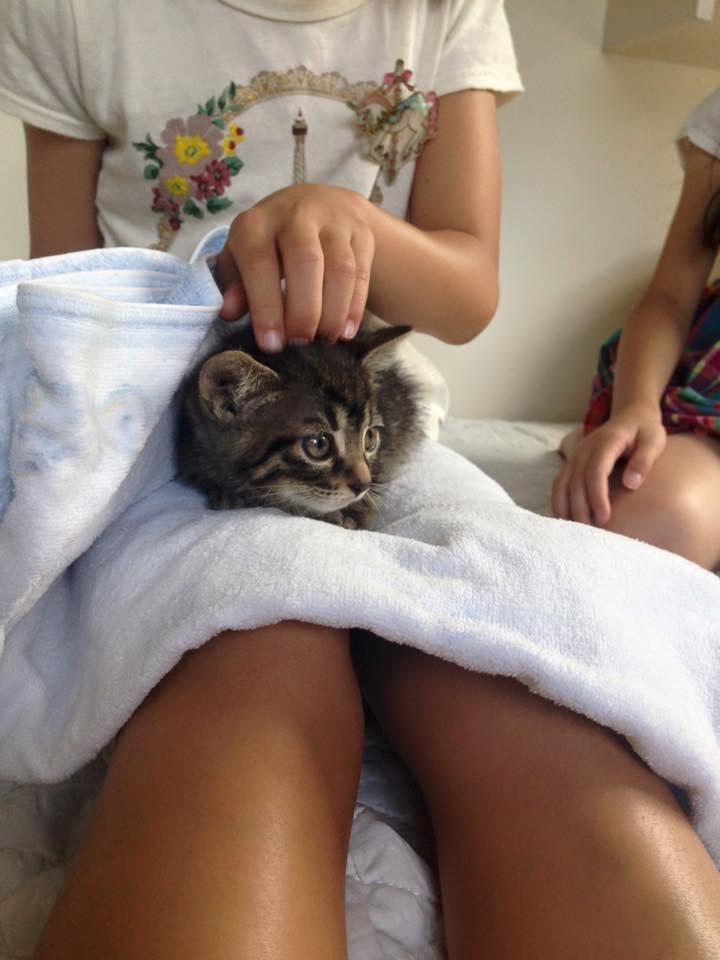 kitty♡_b0195783_8461172.jpg