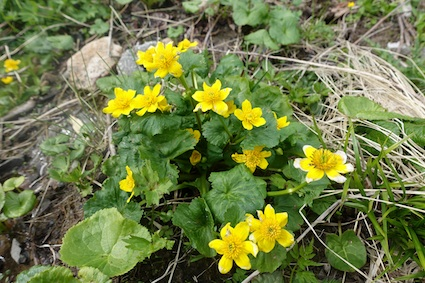 花の白山_f0230689_13551192.jpg