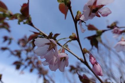 花の白山_f0230689_13552261.jpg