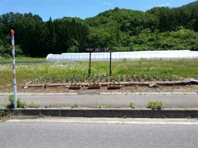田部環境保全会の作業!_a0256619_92167.jpg