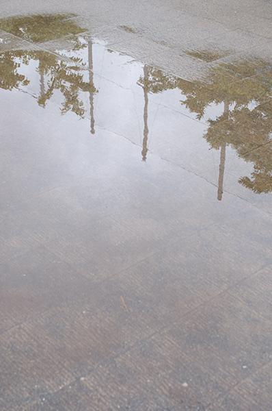 朝の水たまり_a0003650_23143436.jpg