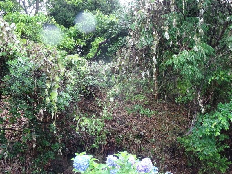 淡輪長生会来訪雨で中止 in うみべの森_c0108460_21410949.jpg