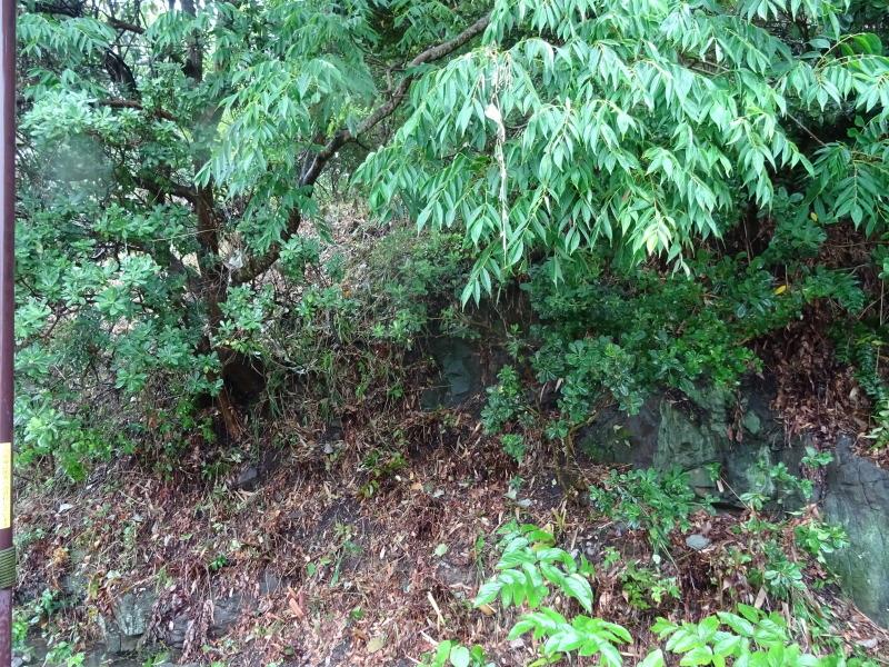 淡輪長生会来訪雨で中止 in うみべの森_c0108460_21411240.jpg
