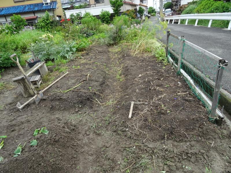サツマイモの苗162株植え付けました     by     (TATE-misaki)_c0108460_23015917.jpg