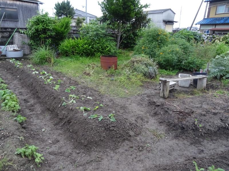 サツマイモの苗162株植え付けました     by     (TATE-misaki)_c0108460_23020423.jpg