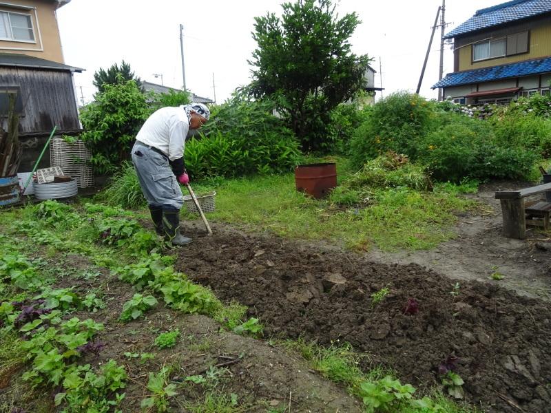 サツマイモの苗162株植え付けました     by     (TATE-misaki)_c0108460_23020957.jpg