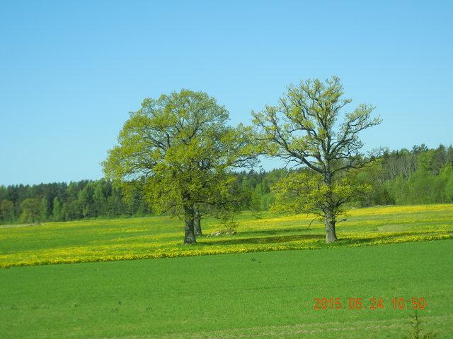 '15,6,9(火)エストニアのパルヌの荘園!_f0060461_10244454.jpg