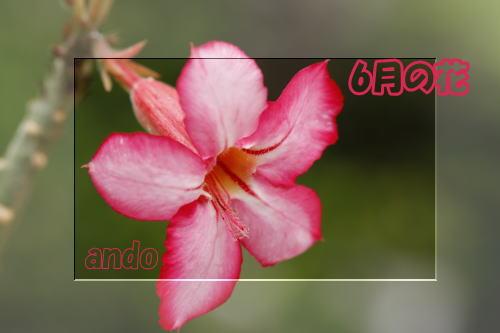 b0038366_1140298.jpg