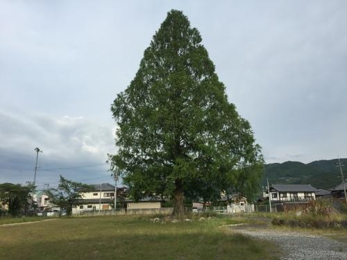 橋本_c0000970_09342991.jpg