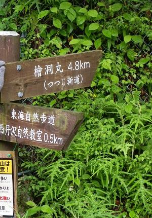 檜洞丸(ひのきぼらまる)_a0075589_1656376.jpg