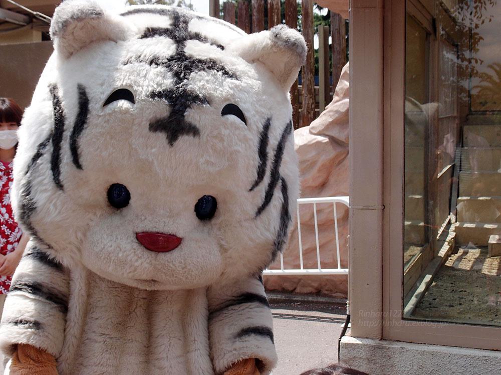 2015.6.7 東武動物公園☆ホワイトタイガーの赤ちゃん命名式【White tiger】_f0250322_2049172.jpg