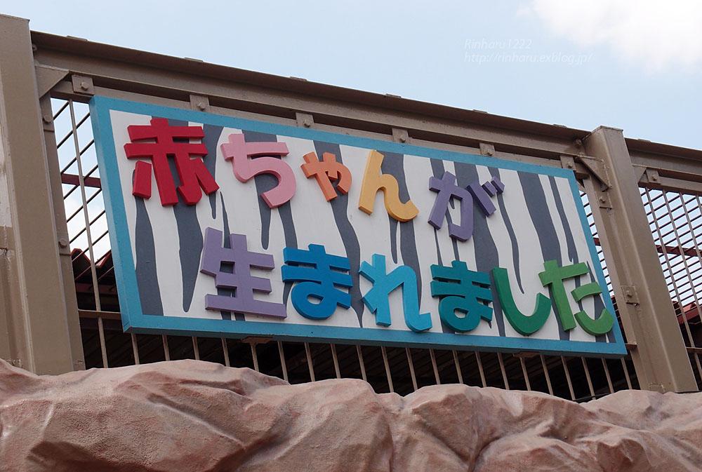 2015.6.7 東武動物公園☆ホワイトタイガーの赤ちゃん命名式【White tiger】_f0250322_2049425.jpg