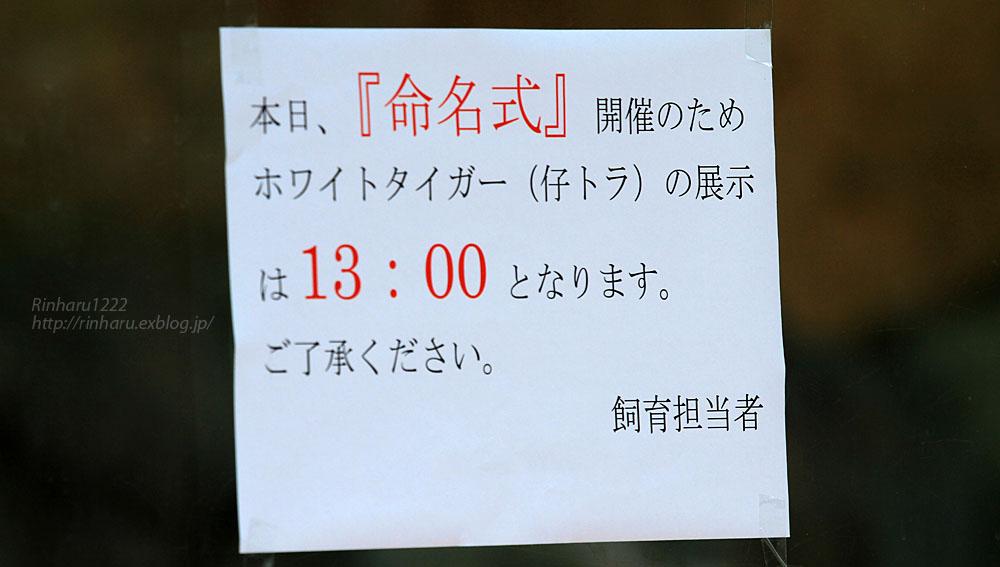 2015.6.7 東武動物公園☆ホワイトタイガーの赤ちゃん命名式【White tiger】_f0250322_2049985.jpg