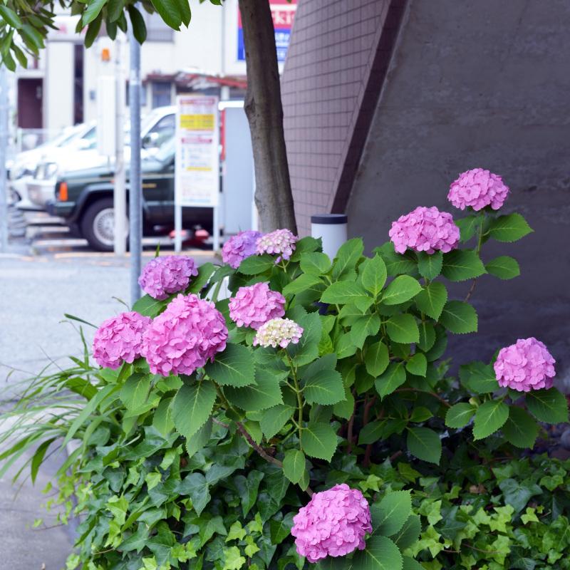 高松街ブラ 錦町一丁目_d0246136_18145572.jpg