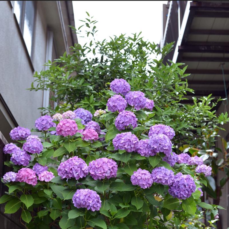高松街ブラ 錦町一丁目_d0246136_18154433.jpg