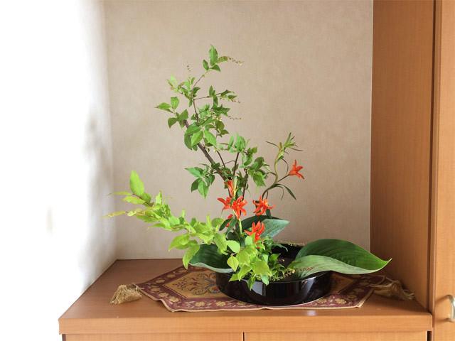 6/9のお花:夏はぜ、姫百合、ぎぼうし_b0042538_11030566.jpg
