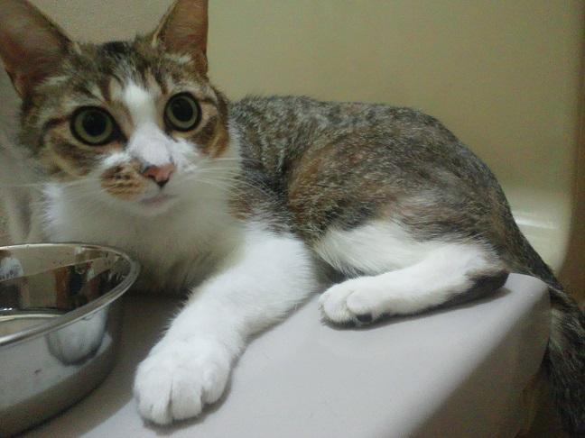 とても穏やかな猫さんです!(乙姫)_f0242002_10124284.jpg