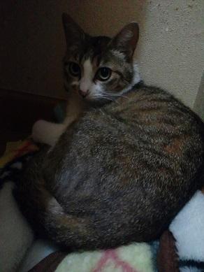 とても穏やかな猫さんです!(乙姫)_f0242002_1013156.jpg