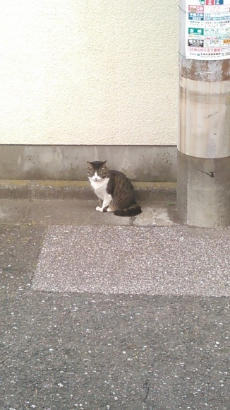 【猫】逃走中_f0141609_12053087.jpg
