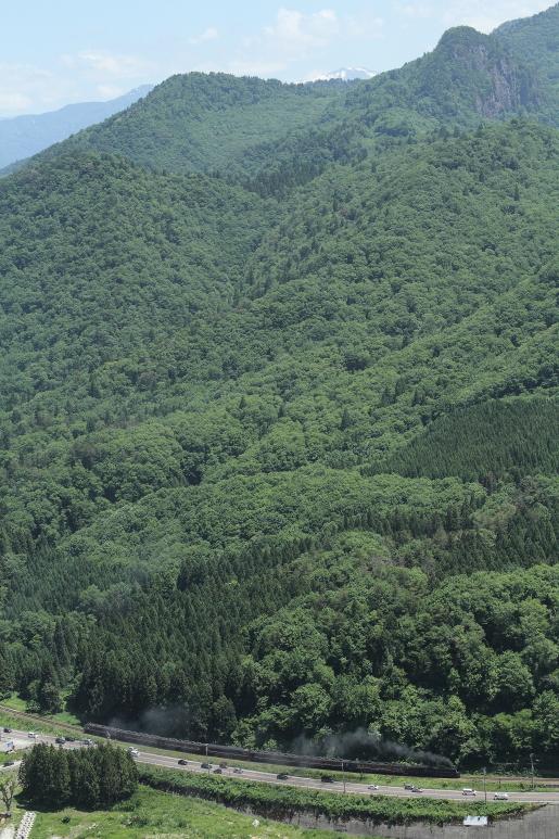 遠くに残雪の頂を望んで緑一色の山裾を汽車が走る - 2015年初夏・磐西 -   _b0190710_0494042.jpg