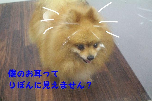 b0130018_2304661.jpg
