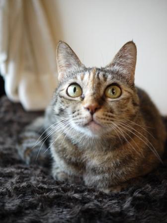 猫のお留守番 ワサビちゃん天ちゃんう京くん編。_a0143140_2224665.jpg